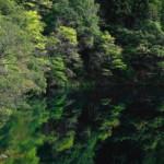 新緑の白丸湖